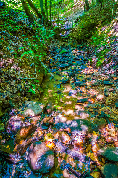 nature around a small creek in the forest woods