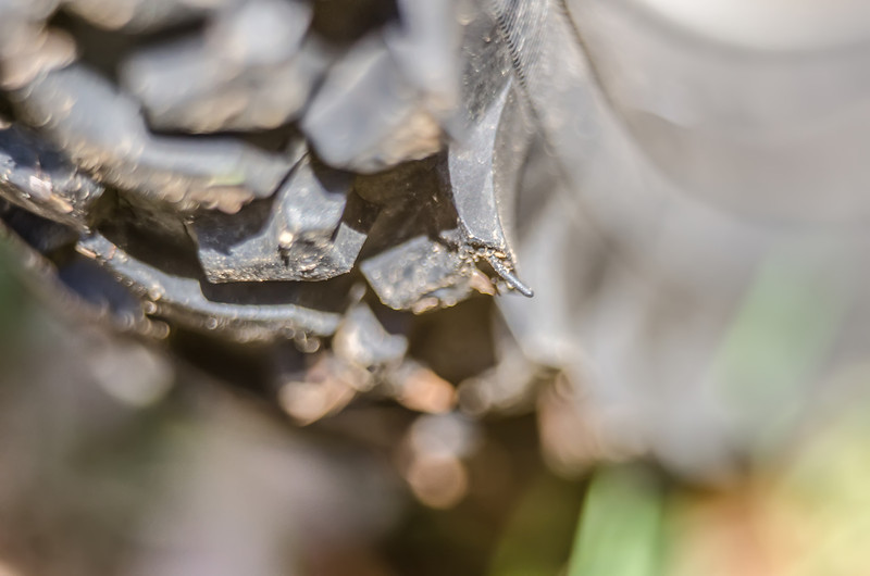 Detail of a Mountain Bike Tire closeup
