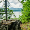 tree stumps sticking out by the lake front