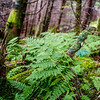 fern growing in deep forest