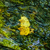 leaf on the water