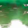 abstract geese flying overk water of lake