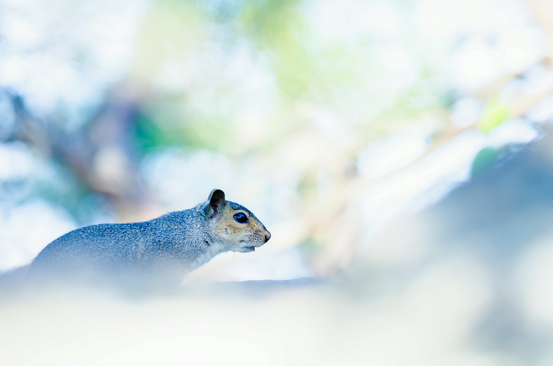 squirrel on the rocks with light bokeh