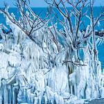 frozen in ice tree along lake erie ohio