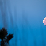 moon rising over palm trees at the beach