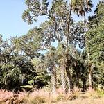 summer scenes around kiawah island south carolina