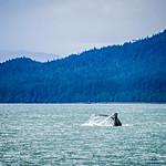 whale watching on favorite channel alaska