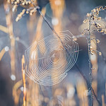 morning sun illuminating spider web oon a lawn