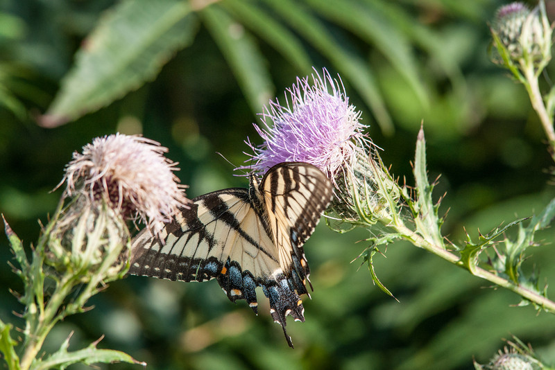 butterfly on flower in mountains