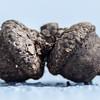 two acorns macro