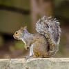 squirrel profile