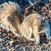 squirrel posing for camera