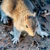 squirrel sitting on ground