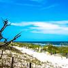 nature scenes around hunting island south carolina