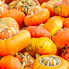 pumpkins on a pumpkin patch