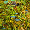 underwater coral reef  sea life